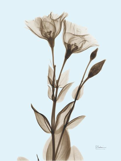 Gentian Sepia-Albert Koetsier-Photographic Print