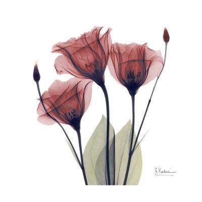 https://imgc.artprintimages.com/img/print/gentian-trio-in-red_u-l-pyjop40.jpg?p=0