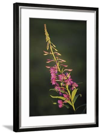 Gentle Breeze-Staffan Widstrand-Framed Giclee Print