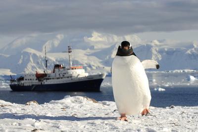 https://imgc.artprintimages.com/img/print/gentoo-penguin-pygoscelis-papua-and-antarctic-cruise-liner-mv-ushuaia-in-neko-harbour_u-l-q13a73m0.jpg?p=0