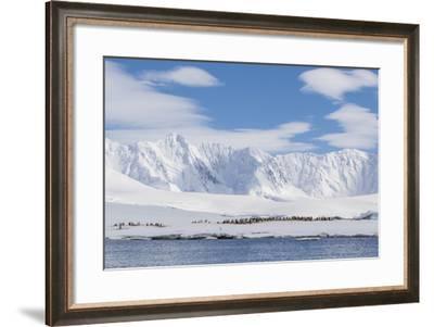 Gentoo Penguin (Pygoscelis Papua) Breeding Colony at Dorian Bay, Antarctica, Polar Regions-Michael Nolan-Framed Photographic Print
