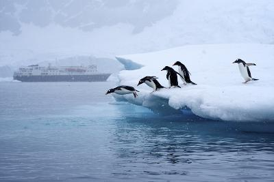 Gentoo Penguins Jump Off of the Ice into the Water Near a Cruise Ship-Jim Richardson-Photographic Print