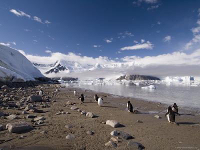 Gentoo Penguins, Neko Harbor, Gerlache Strait, Antarctic Peninsula, Antarctica, Polar Regions-Sergio Pitamitz-Photographic Print