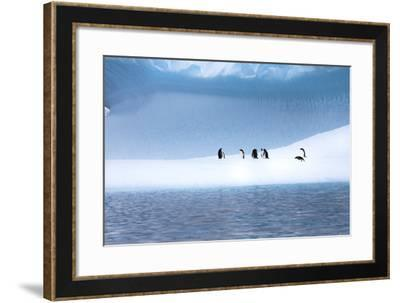 Gentoo Penguins, Pygoscelis Papua, on a Blue Iceberg in the Area known as Iceberg Alley-Ira Meyer-Framed Photographic Print