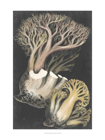 Genus Clavaria III-Leuba F.-Art Print