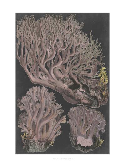 Genus Clavaria IV-Leuba F.-Art Print