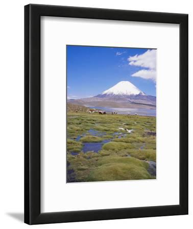 Chile, Andes, Lauca National Park, Lake Chungara and Volcan Parinacota, 6300M
