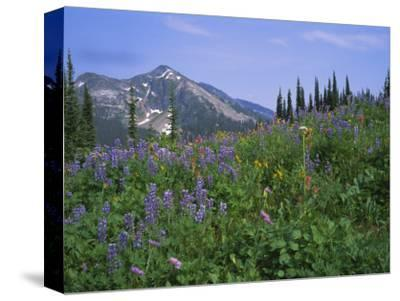 Flower Meadow, Mount Revelstoke National Park, Rocky Mountains, British Columbia (B.C.), Canada