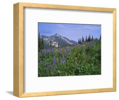 Flower Meadow, Mount Revelstoke National Park, Rocky Mountains, British Columbia (B.C.), Canada