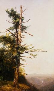 Dying Tree on Mountaintop by John Frederick Kensett by Geoffrey Clements