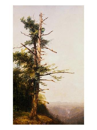 Dying Tree on Mountaintop by John Frederick Kensett