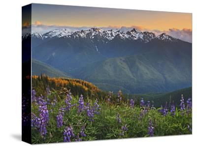 Early Summer Storm Clears the View of the Olympic Mountains, with Lupine Wildflowers