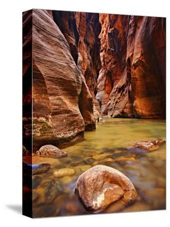 Virgin River Narrows Glows with Reflected Morning Light, Zion National Park, Utah, USA