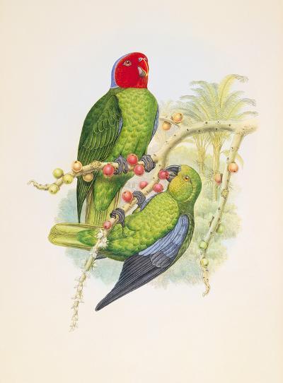 Geoffroyius Timorlaoensis-William Hart-Premium Giclee Print
