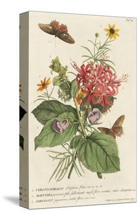 1. Ceratocephalus, 2. Martynia, 3. Narcissus