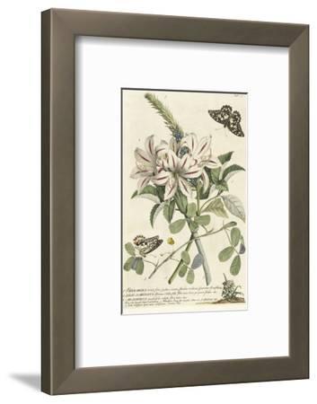 1. Sherardia, 2. Lilio-Narcissus, 3. Arachidna