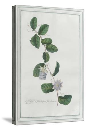 Granadilla; Fructu Citriformi, Foliis Oblongis. Tourn