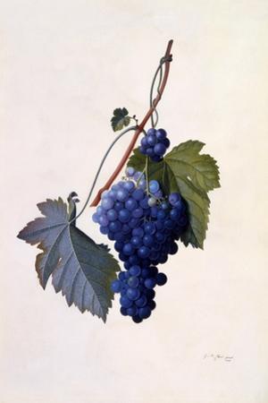 Grapes, C.1747