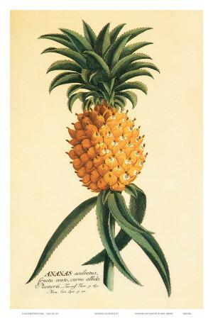 Ho'okipa, Hawaiian Pineapple c.1742