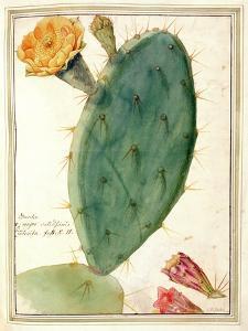 Pd.115-1973. F38 Detail of Cactus with Orange Flower, C.1764 by Georg Dionysius Ehret