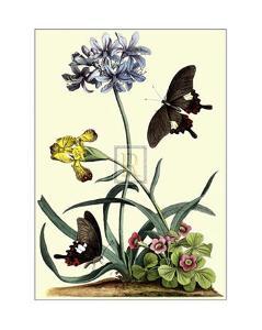 Polianthius, Oxalis and Iris by Georg Dionysius Ehret
