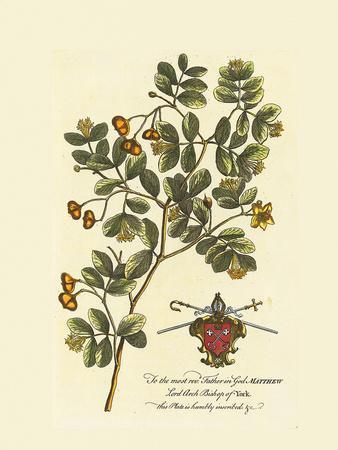 The Archbishop Of York Botanical