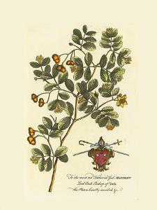 The Archbishop Of York Botanical by Georg Ehret