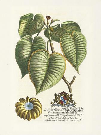 The Duke Of Dorset Botanical