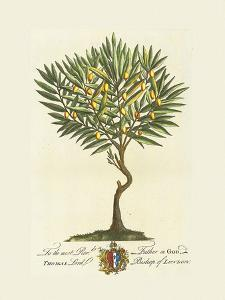 The Lord Bishop Of London Botanical by Georg Ehret