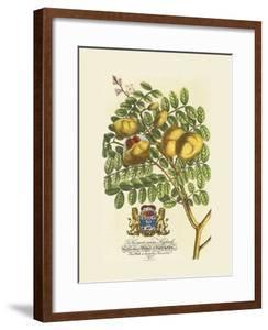The Prince Saxegotha Botanical by Georg Ehret
