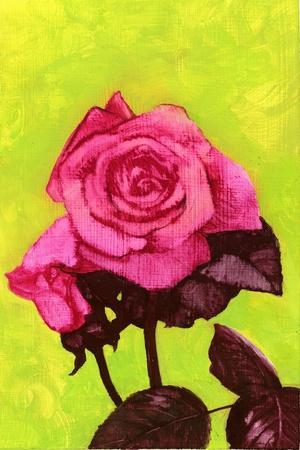 Bright Rose, 1980s