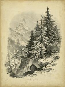 The Larch by George Barnard