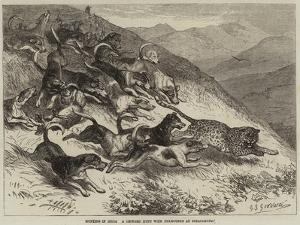 Hunting in India, a Leopard Hunt with Foxhounds at Ootacamund by George Bouverie Goddard