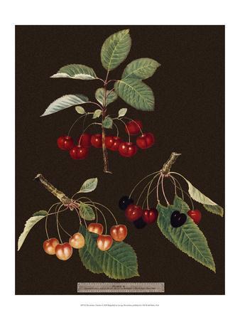 Brookshaw Cherries