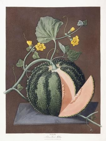 Silver Rock Melon, 1812