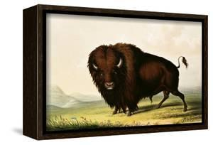 A Bison, circa 1832 by George Catlin