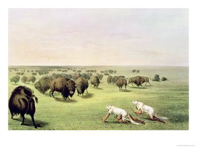 Hunting Buffalo Camouflaged with Wolf Skins, circa 1832