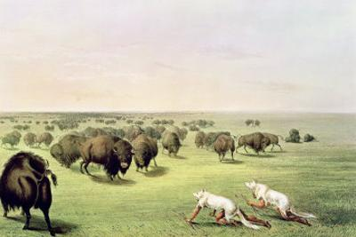 Hunting Buffalo Camouflaged with Wolf Skins, circa 1832 by George Catlin