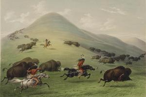 The Buffalo Hunt by George Catlin