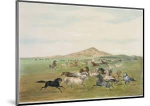 Wild Horses at Play by George Catlin