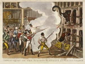 Destruction of the Furious Elephant at Exeter Change, 1826 by George Cruikshank