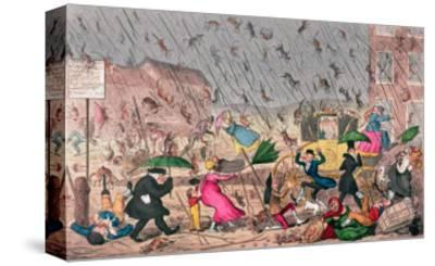 """Very Unpleasant Weather, or the Old Saying Verified """"Raining Cats, Dogs and Pitchforks!"""""""