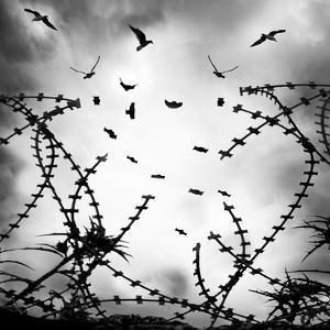 Free As a Bird by George Digalakis