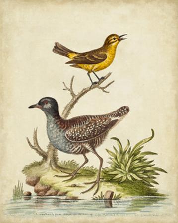 Antique Bird Menagerie II