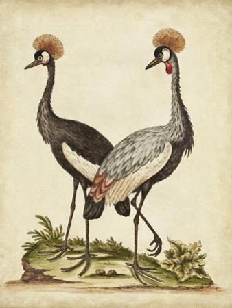Antique Bird Menagerie VII