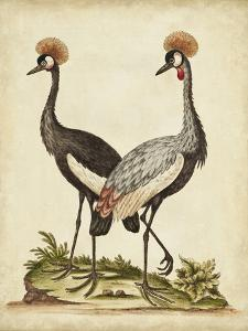 Antique Bird Menagerie VII by George Edwards