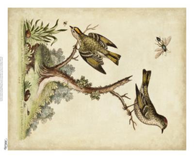 Companions in Nature III