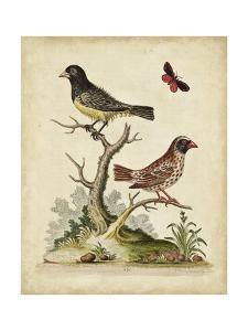 Edwards Bird Pairs I by George Edwards