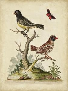 Edwards Bird Pairs I by George Edwards