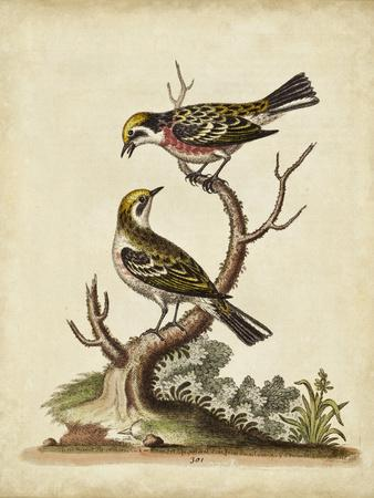 Edwards Bird Pairs II